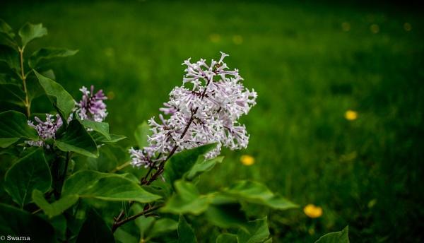 Floral XX by Swarnadip