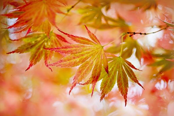 Foliage Frenzy by jackyp