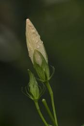 Photostacking Flower