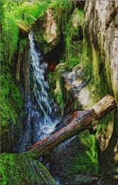 tree stump lying cross on rock