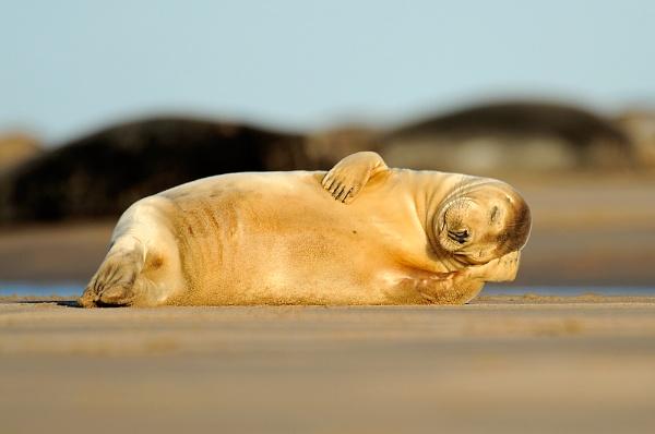 Having a nap by geoffrey baker