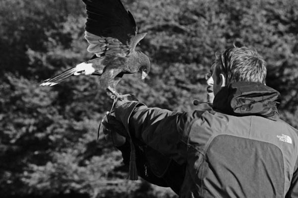 The falcon show by diehard4