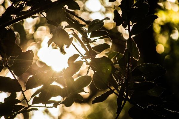 Oak tree 2 by derrymaine