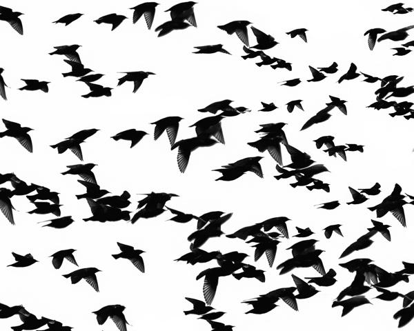 Starlings by victorburnside