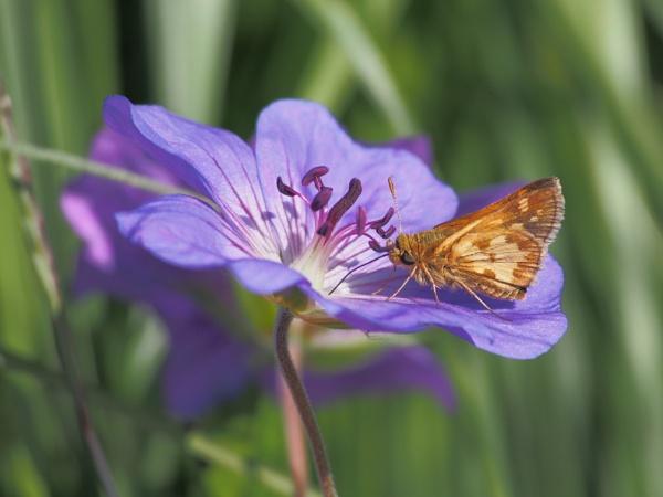 Moth by Xmplary