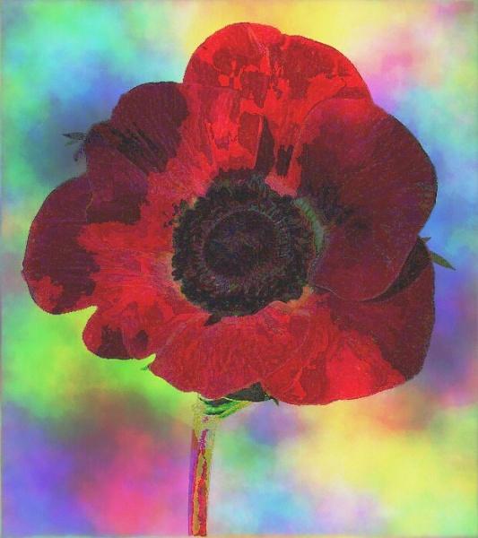 Poppy by sakisuki