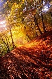 Ludlow Autumn