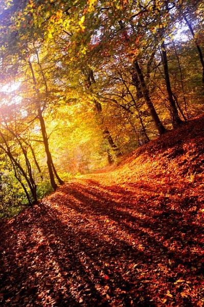 Ludlow Autumn by Nicksi