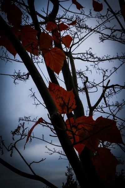 351 Autumn leaves by Seonaid