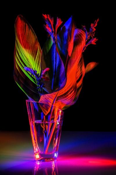 Fire Flowers by Archangel72