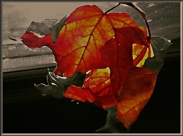 Leaf by Chrisjaz
