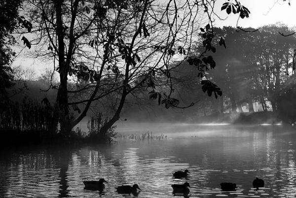 Mist by PEELO