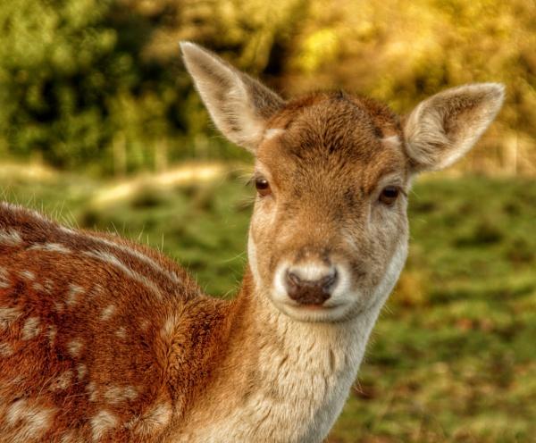 Bambi by pentaxpatty