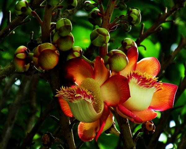 Flor del Taparón by Potra