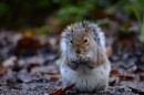 Nutty squirrel by WILLIAST