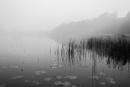 Fog at the lake.
