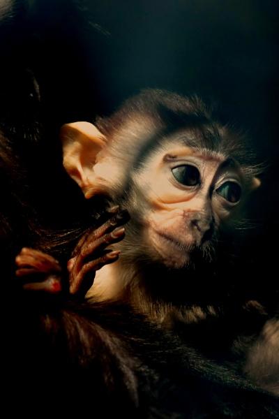 Lonely little Ape by aldasack1957