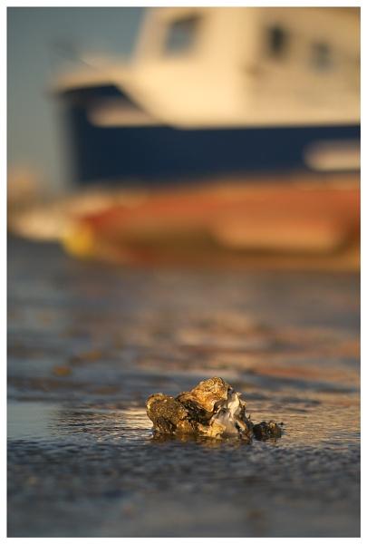 Beach life... by Greyheron