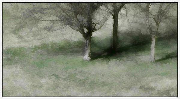 tree phantasy by macdaniel