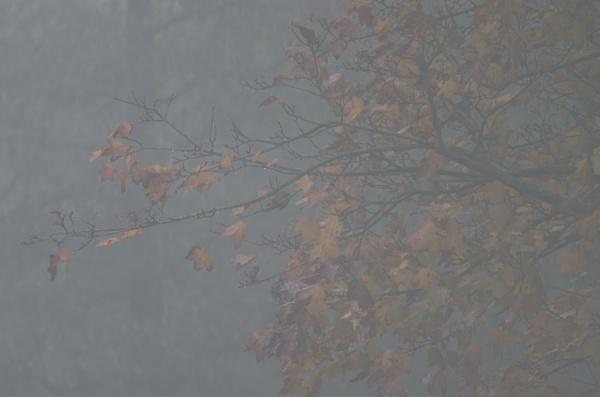 autumn wonderland by macdaniel