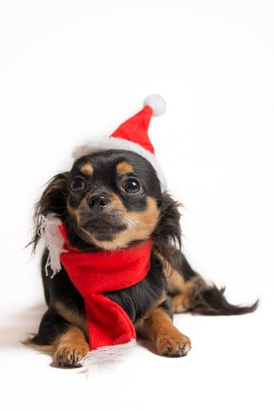 Santa\'s little helper by garyg