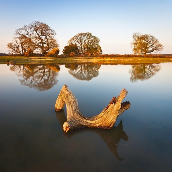 Dragon in a Lake.