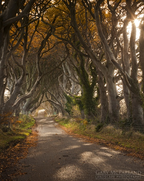 The Dark Hedges by garymcparland
