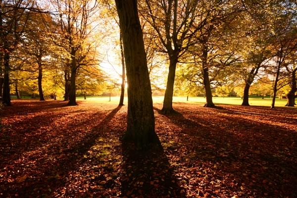 Autumn rays by Brenty