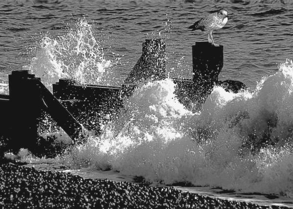 Storm Force by derekv