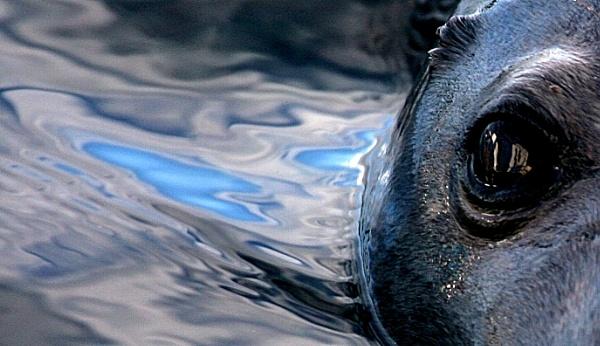 Seal Eye