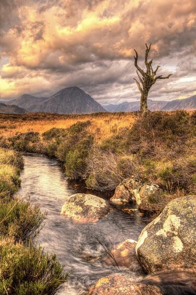 Lone tree on Rannch Moor by ianto