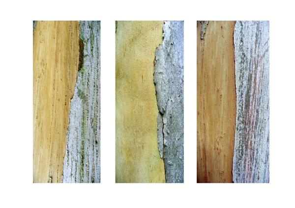 bark by ireland