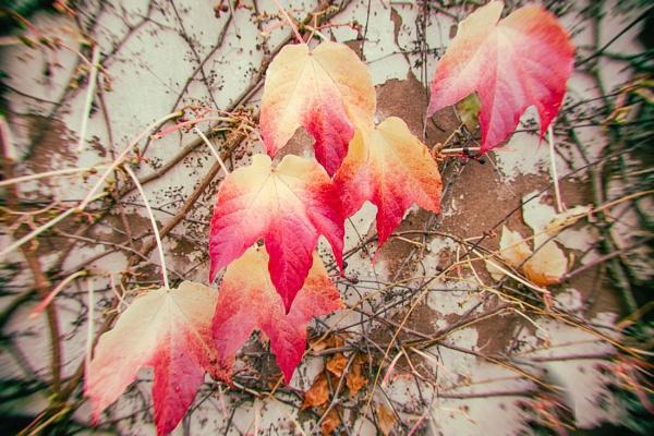 Leaves in the wind by mlseawell