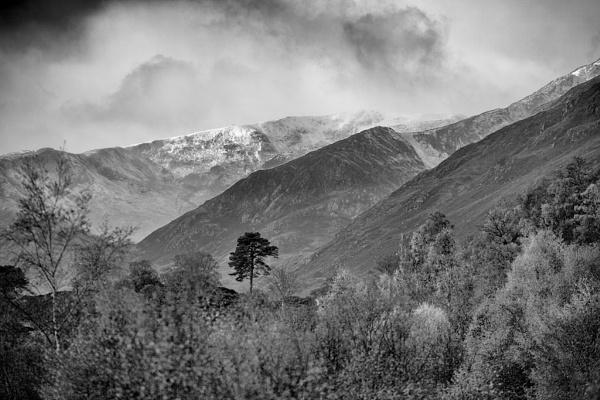 Lone Pine by stevesloan