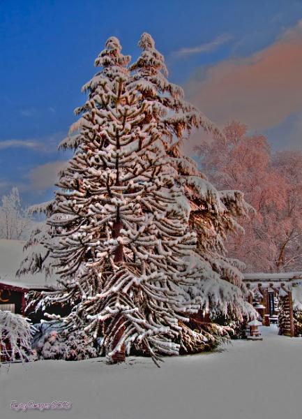 Winter In The Garden by Mozzytheboy