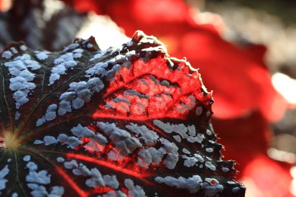 leaf by steve486