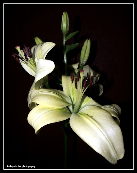 Illuminated Lily by kathrynlouise