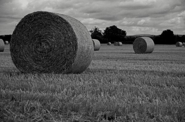 Harvest time. by caj26