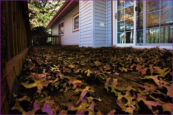 Fall Leaves by pilgrim57