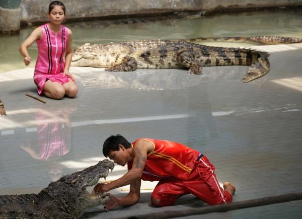 crocodiles by fotozw
