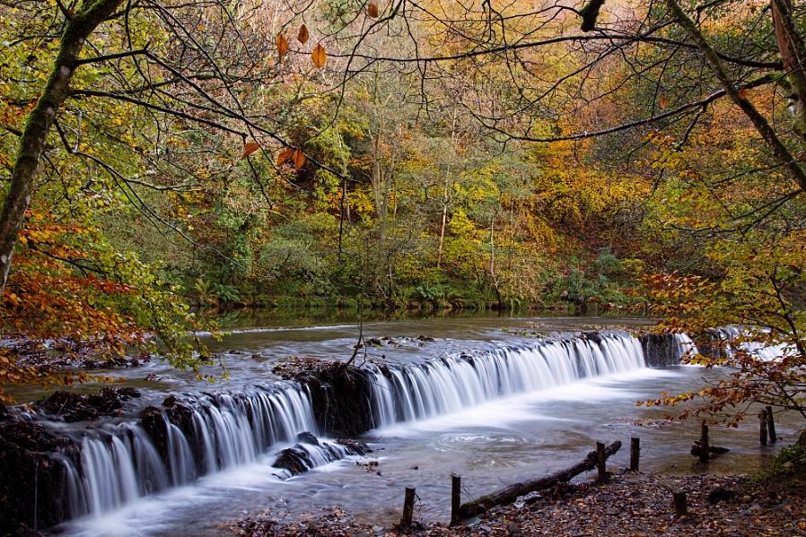 Plymbridge Weir (2)