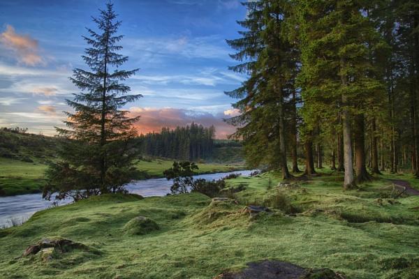 Bellever forest Dartmoor by Devon_Sunsets