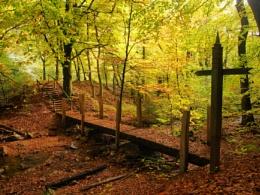 Autumn on the Urselbach