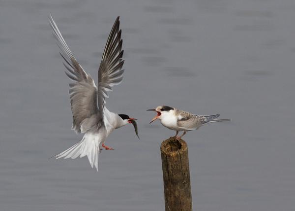 Feeding time by BirdmanDon