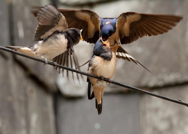 Feeding time (2) by BirdmanDon