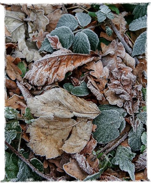 A little Autumn frost by ChrisOs