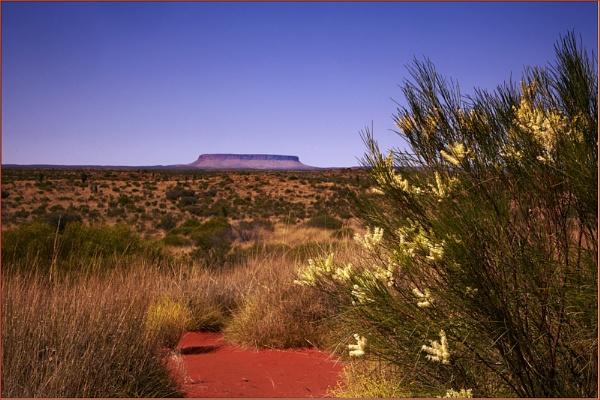 Uluru by davidbailie