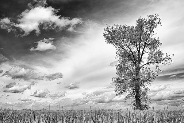 Single Tree by llareggub