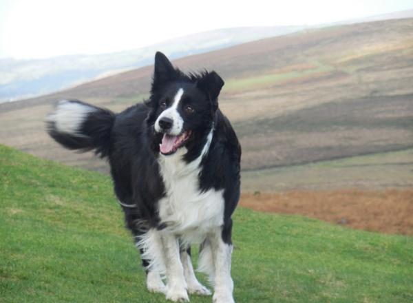 a windswept dog
