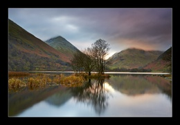 Brotherswater Trees